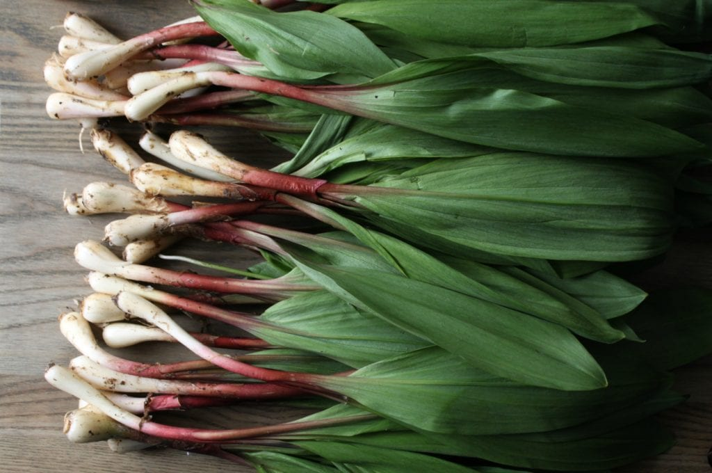 Wild Leeks or Ramps are only available during a short Spring season. Make the most of your foraging harvest by preserving them in this delicious and versatile pesto. #pesto #wildleeks #ramps #foraging #foraged #seasonal